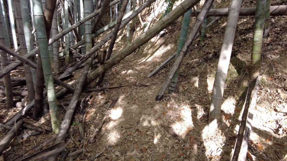 倒れた竹が道を塞いでいて 通るのが大変だ