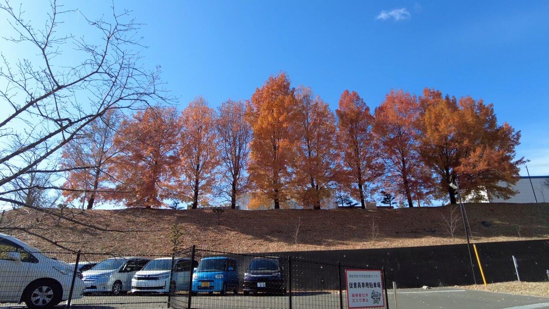 駐車場の紅葉がとてもきれいだ