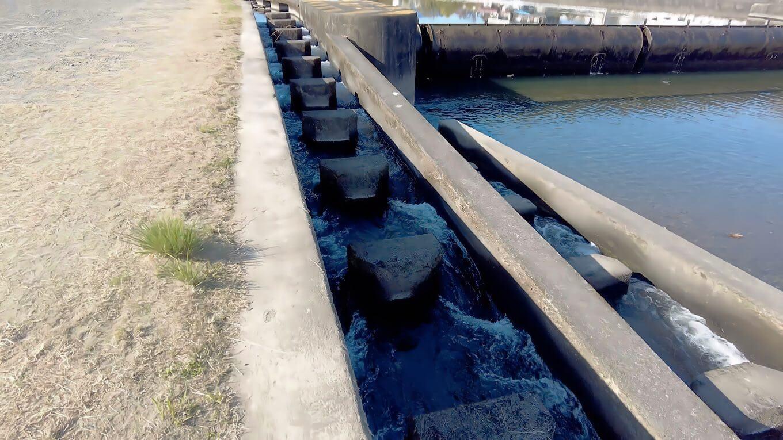 堰は魚が遡上できるルートが確保された造りになっている