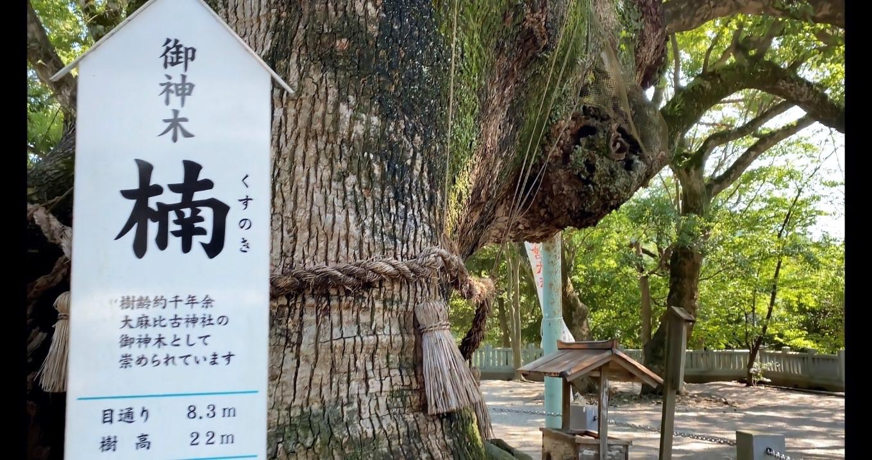 ご神木は樹齢1 000年