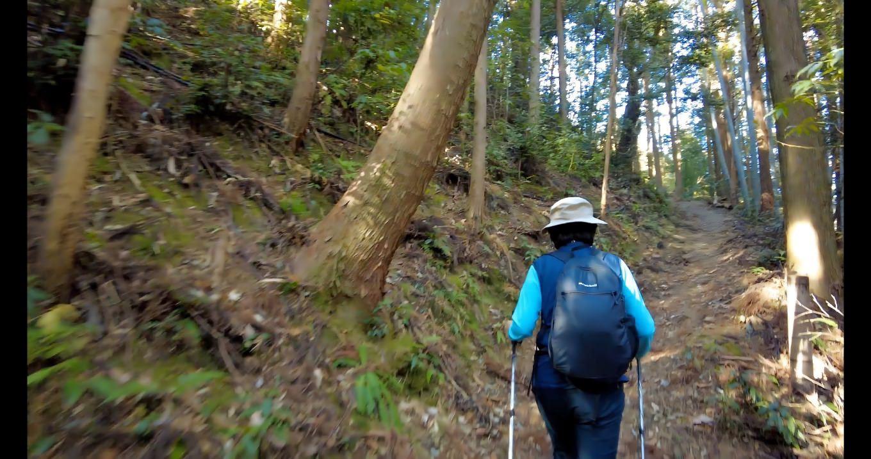 登山道は意外と 失礼 整備されており とても歩きやすい