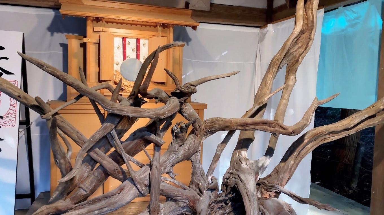 伊勢神宮遙拝所に大きな根っこを展示していた