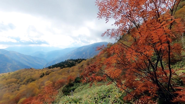 ナナカマドの紅葉が印象的