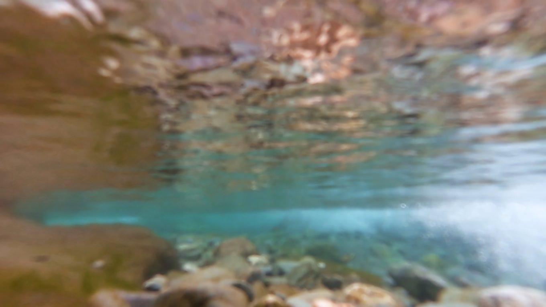 吉野川の水が美しい