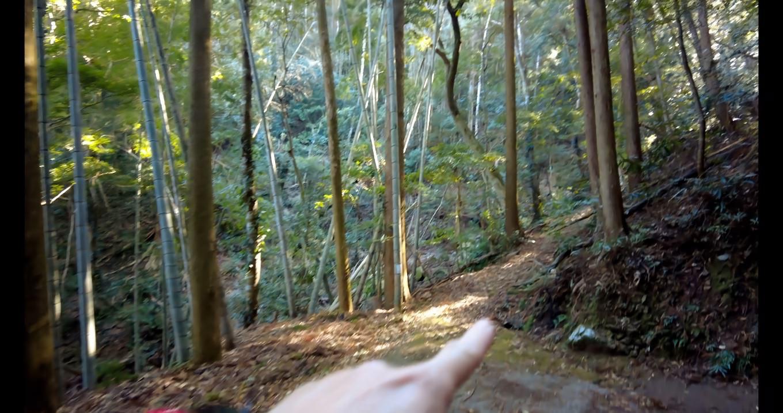 ここから登山道になる