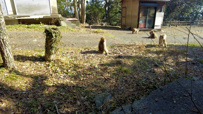 お猿公園に到着