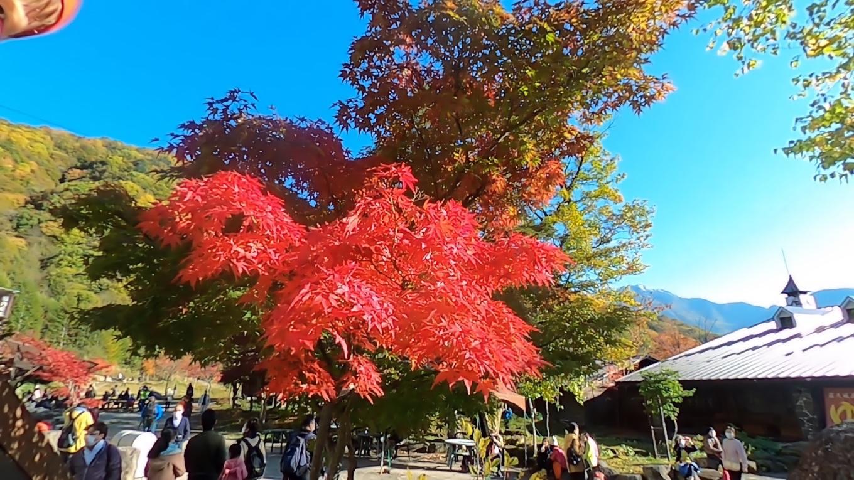 しらかば平駅周辺は 紅葉が盛り