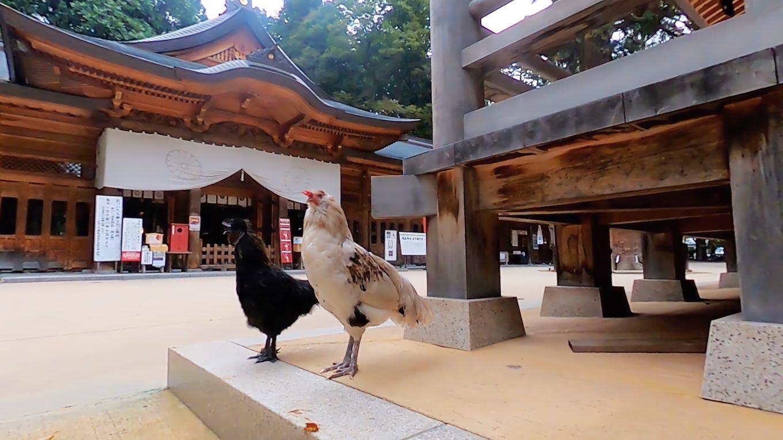 拝殿前にも鶏