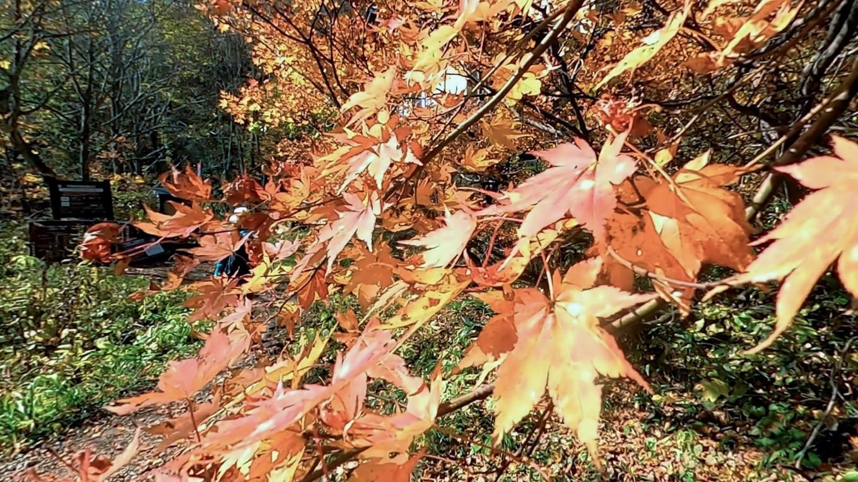 このあたりは紅葉の盛りだ