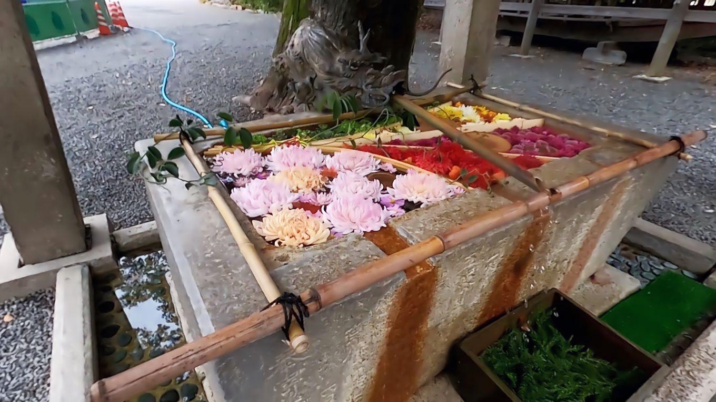 手水舎に花を浮かべている