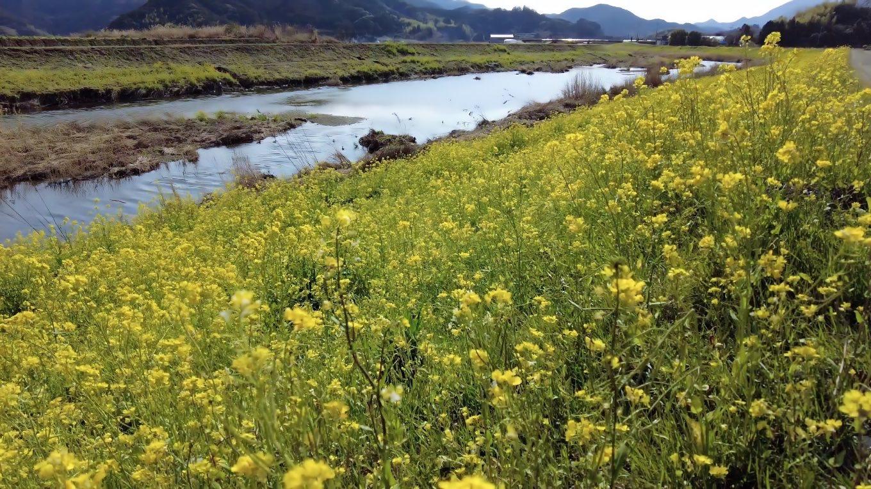 波介川の対岸を戻った