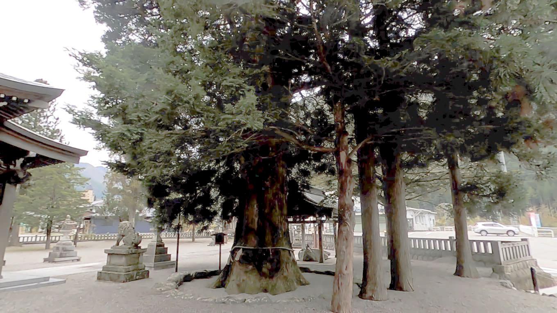 ご神木は樹齢300年以上と言われている