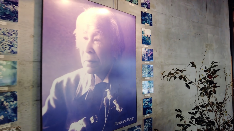 その名称は 高知県出身の植物学者 牧野富太郎 まきのとみたろう に由来する