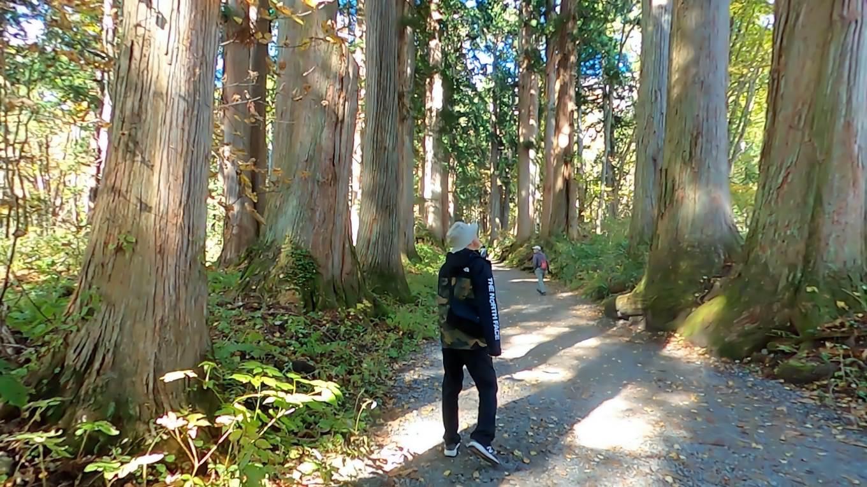 樹齢400年を超えるという杉並木の中を歩いて行く