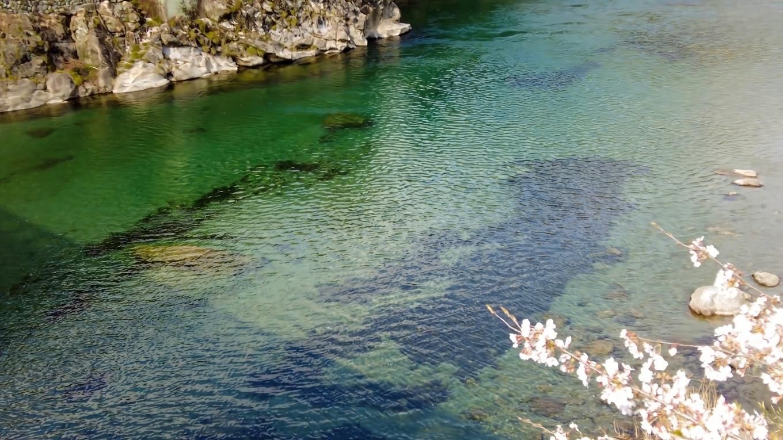 土居川は仁淀川の支流で 仁淀ブルーがとても美しい川だ