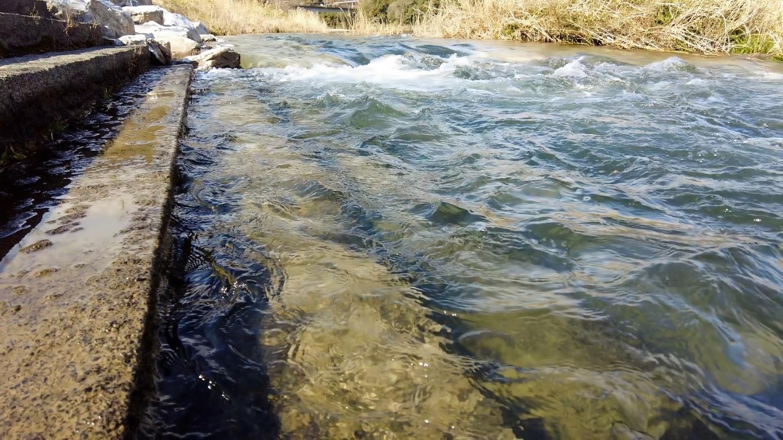 この日の仁淀川は増水していて 少しにごり気味