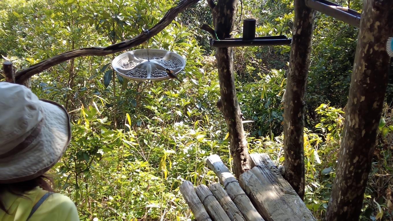 餌台を作って野鳥を呼び寄せている人がいた