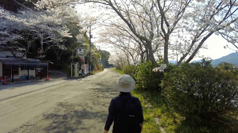 少し風が強く 桜吹雪になっていた