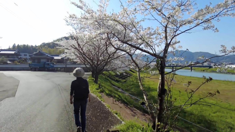 満開の木や葉っぱが出た木やまだ蕾の木など バラバラの咲き具合だった
