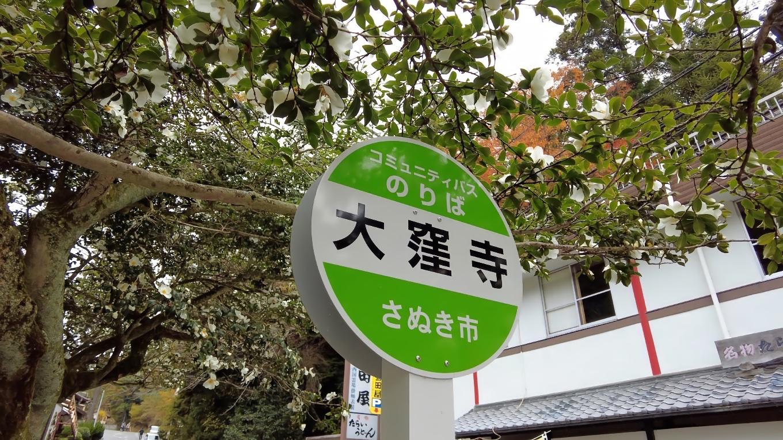 お店を出たところにあるのが 香川の保存木に指定されている大窪寺のサザンカ