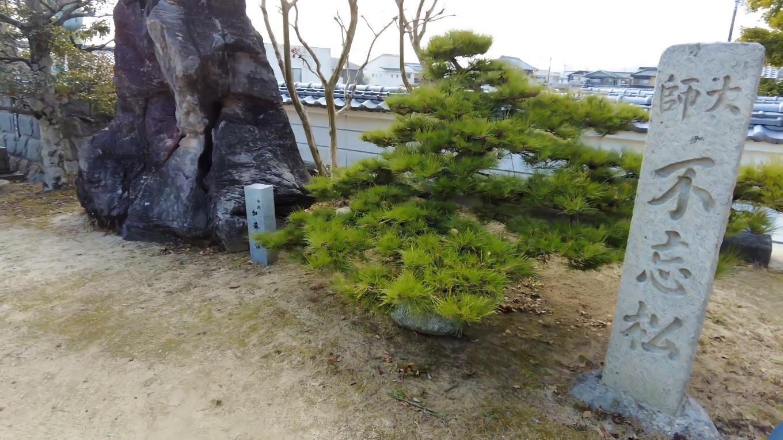 弘法大師が寺を建立した際に手植えしたという不忘松
