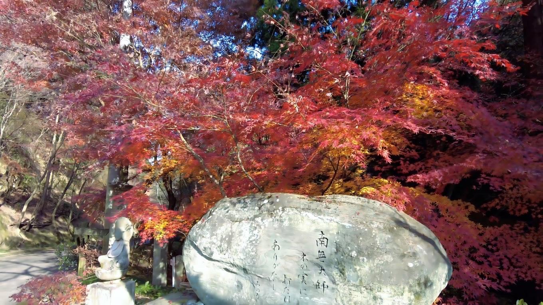 参拝を終え車で下山する途中の 紅葉が美しかった