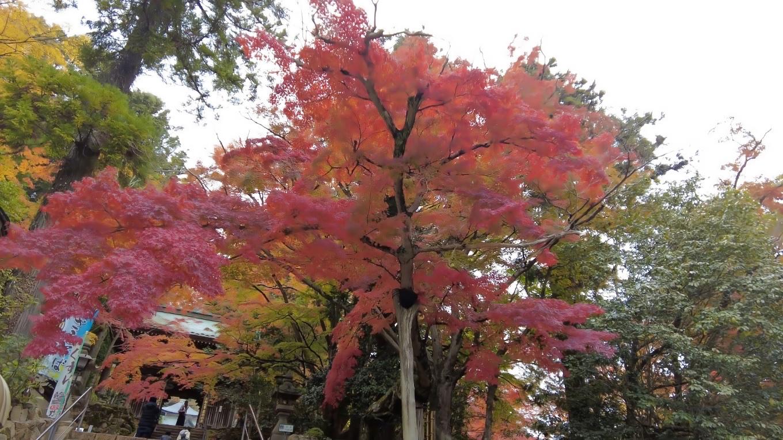 山門の紅葉が素晴らしい