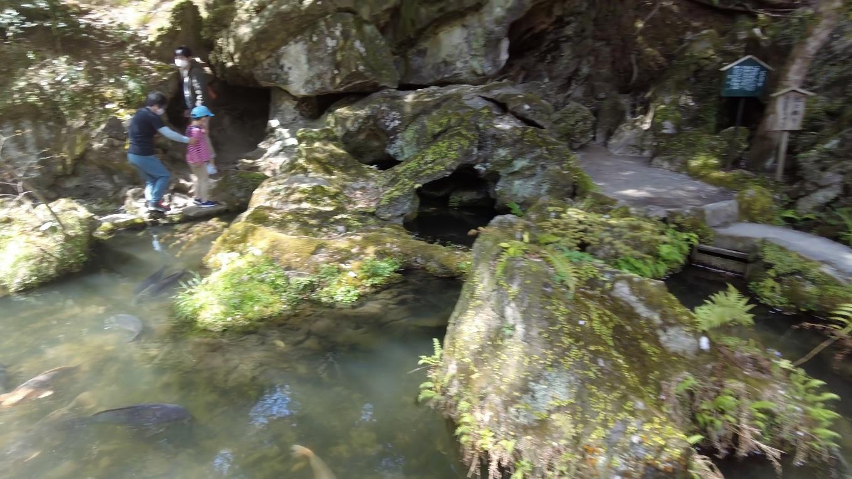 大きな鯉が泳ぐ池の向こうに くぐり岩がある