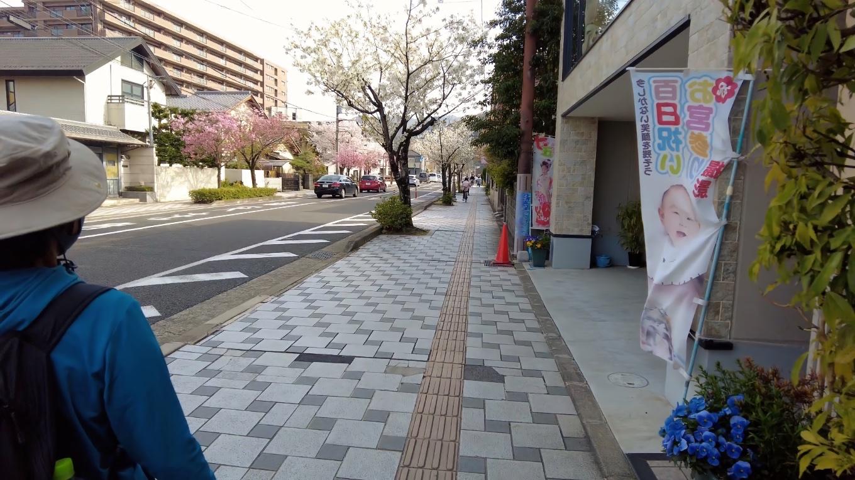 きれいに舗装された歩道が続く