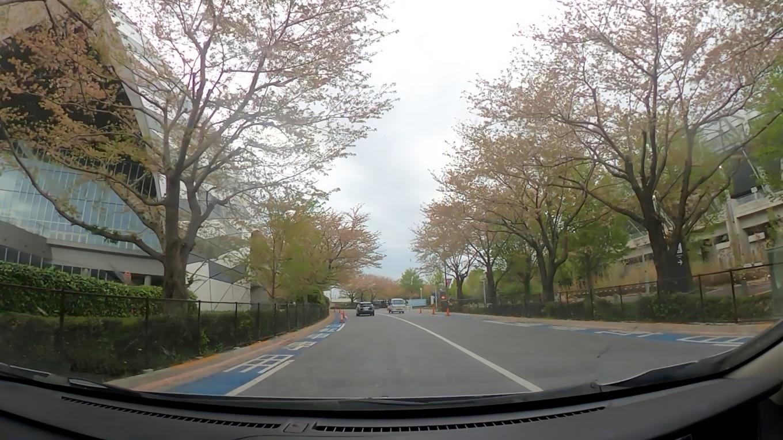 しかしこの日は既に桜はほぼ散っていた 涙