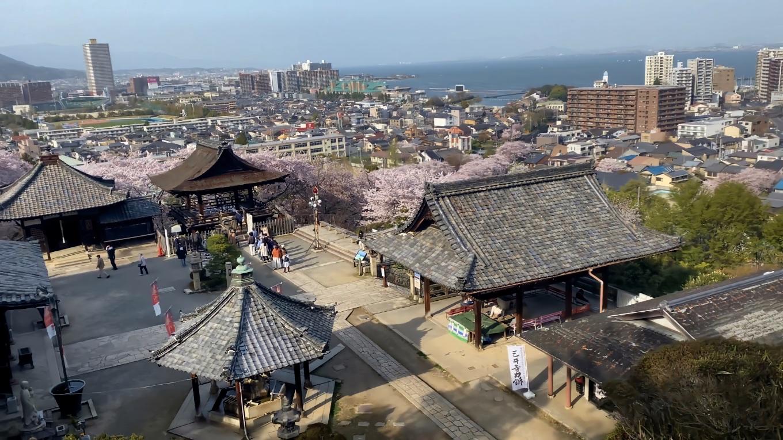 ここから琵琶湖がきれいに見える