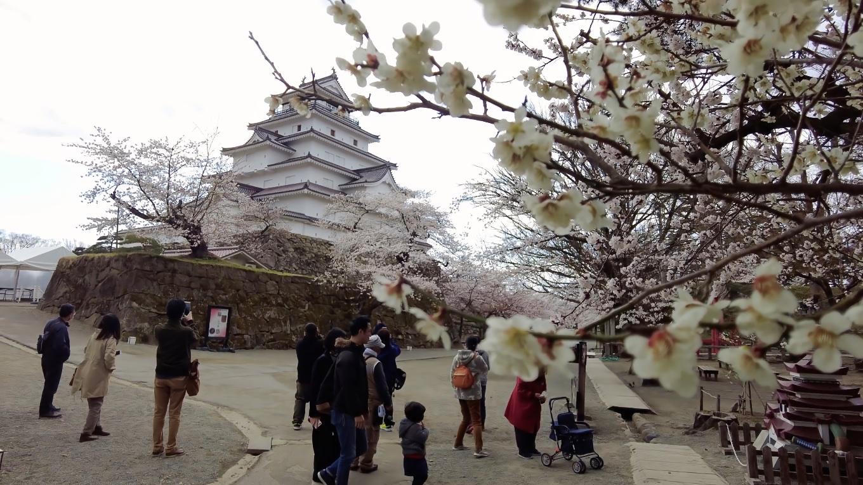 梅と桜と天守閣のコラボレーション