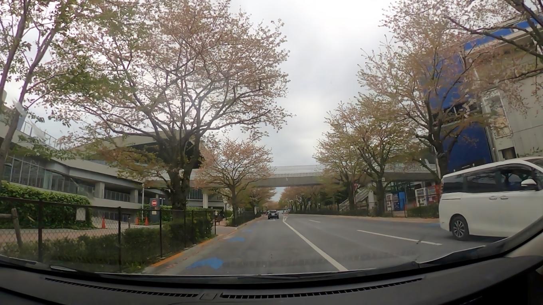 ここから桜並木が始まっている