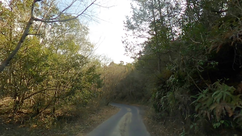 この道が まるで高知県の道のような細い道なので要注意