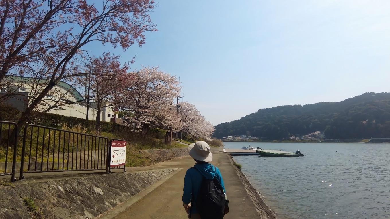 桜が見事なので お花見スポットとしてもいい場所だ 誰もいなかったけど