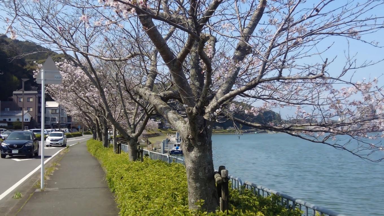 ここから琵琶湖の方に向かって瀬田川の右岸を歩いて行く