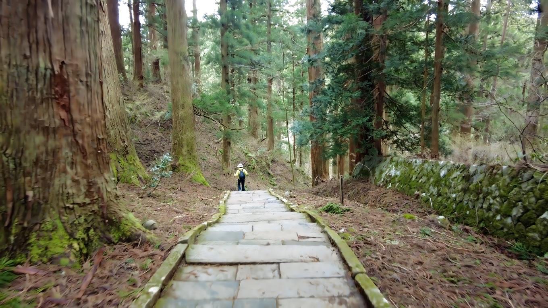 杉並木は 国の特別天然記念物に指定されている