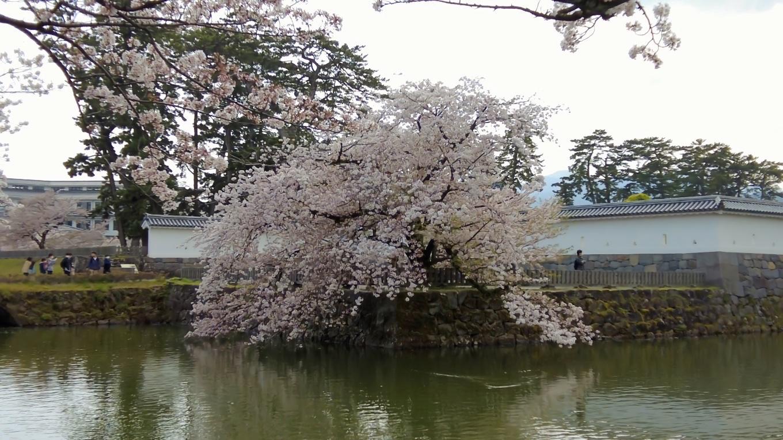 しだれ桜がお堀に映える
