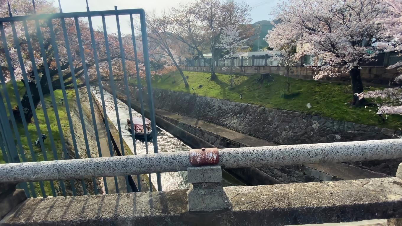 橋から疏水を見下ろす