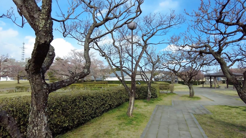 入り口の桜は 既に散っていた