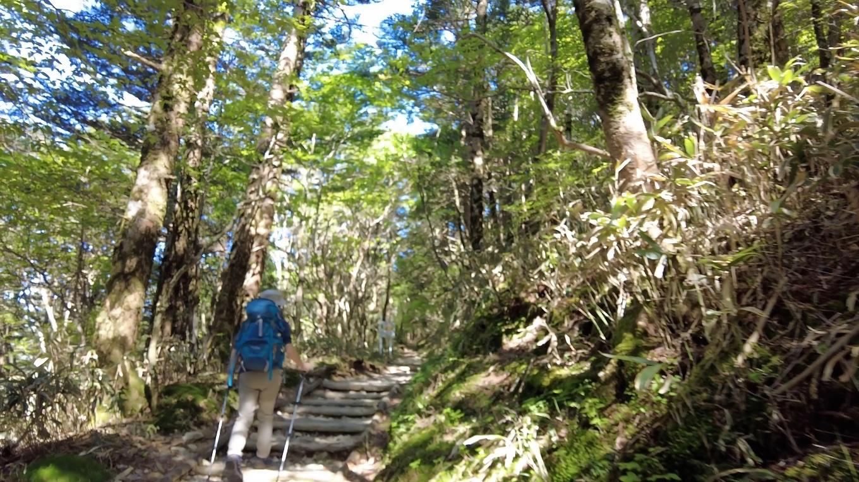 最初は林間コースで 日陰がある