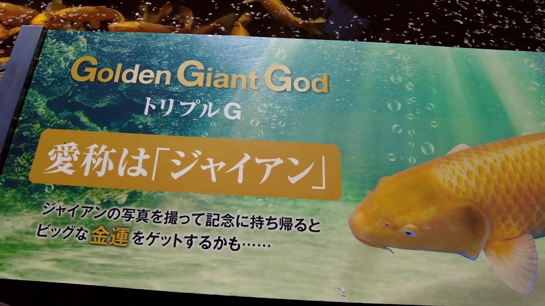 下りたところに ジャイアンという金色の鯉
