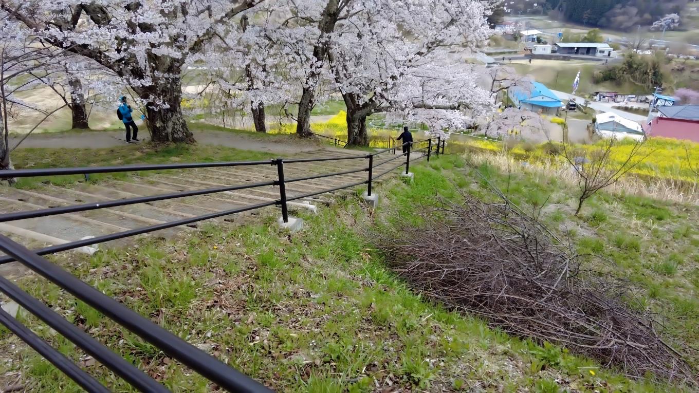 滝桜を見下ろす位置に移動した