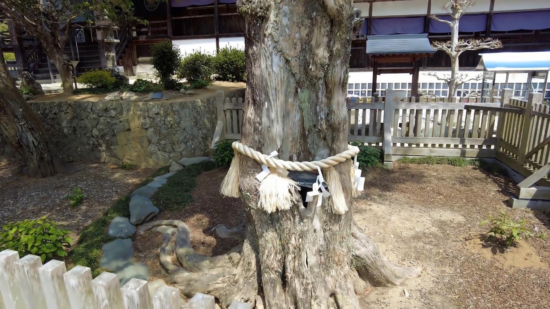 ご神木は羅漢槙で 樹齢270年