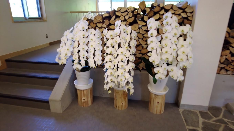 オープンしたばかりと言うことで お祝いのランの花が飾られていた