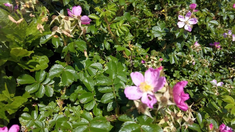 花が咲いていた