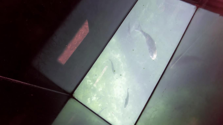 泳いでいる魚がバッチリ見える