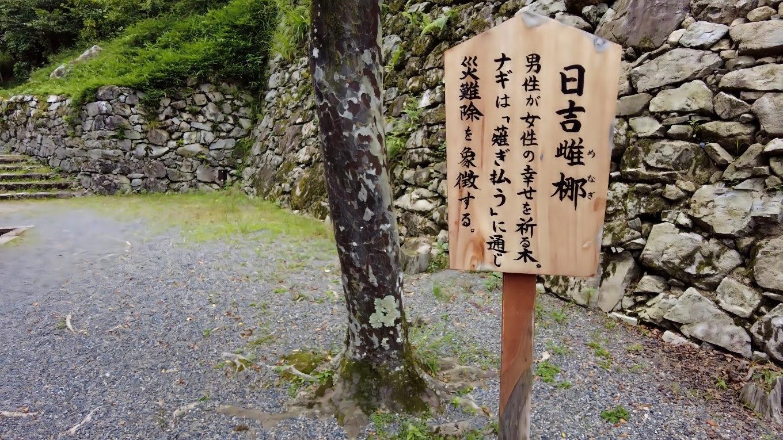 日吉女梛 ひよしめなぎ は 男性が女性の幸せを願う木だそうだ