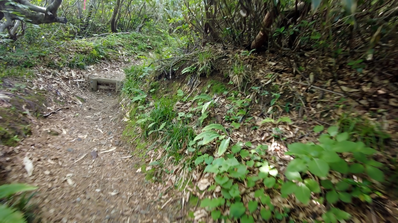 登っていくとさすがに舗装は無くなり 登山道らしくなってきた
